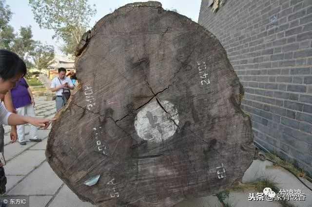 18吨重的千年金丝楠木,价值2000万