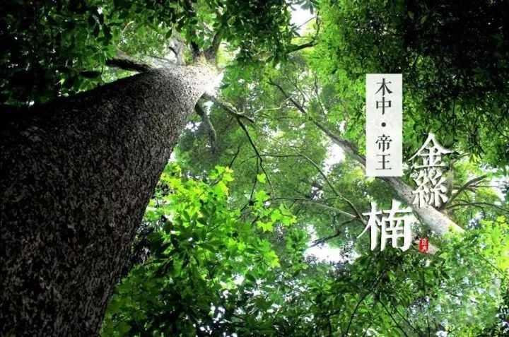 真正的王者之木金丝楠木