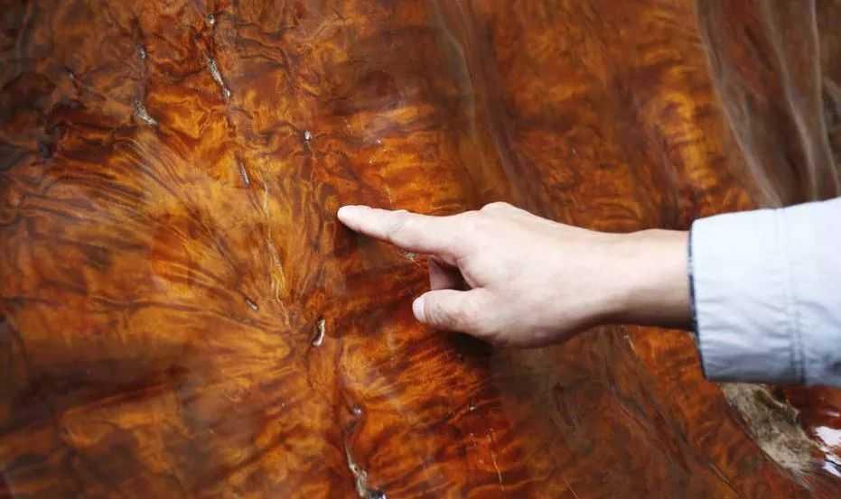 世界最大金丝楠木再贵阳,重16吨价值超千万
